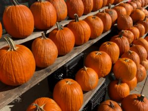Pumpkin Seeds – Don't Throw Them Away!!!!