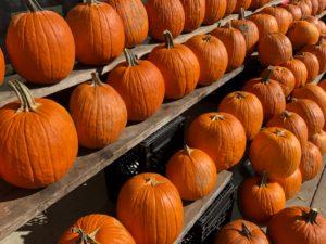 Pumpkin Seeds – Don't Throw Them Away!!!!